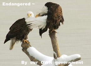 Endangered ~           By  our  OWN  government