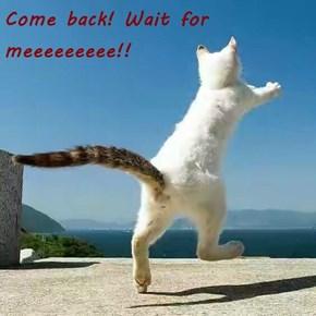 Come back! Wait for meeeeeeeee!!