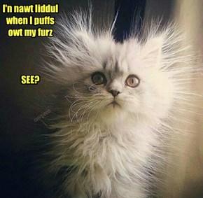 I'n nawt liddul when I puffs owt my furz     SEE?