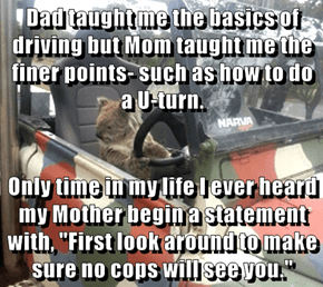 """Dad taught me the basics of driving but Mom taught me the finer points- such as how to do a U-turn.  Only time in my life I ever heard my Mother begin a statement with, """"First look around to make sure no cops will see you."""""""
