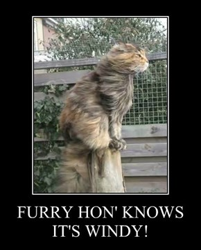 FURRY HON' KNOWS IT'S WINDY!