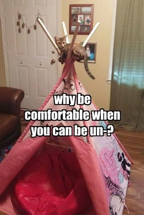 why be comfortable when you can be un-?