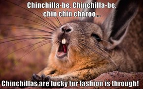 Chinchilla-be, Chinchilla-be,                                  chin chin charoo...  Chinchillas are lucky fur fashion is through!