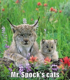 Mr. Spock's cats
