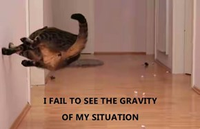 I FAIL TO SEE THE GRAVITY                                                                   OF MY SITUATION