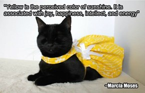 """Yellow is the perceived color of sunshine. It is associated with joy, happiness, intellect, and energy"""
