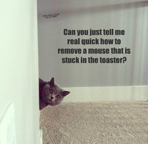 "I Was Just Thinking To Myself ""What A HORRIBLE Smell!"".....When My Cat Asked Me This Question."