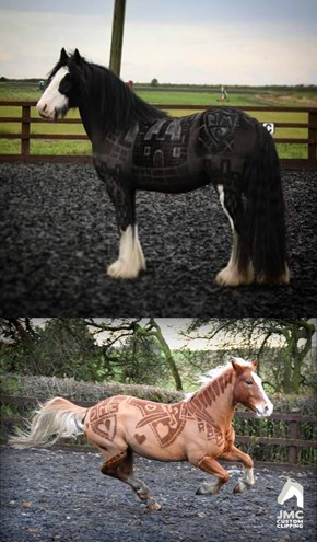 Creative Horse Clipper Turns Coats Into Works of Art