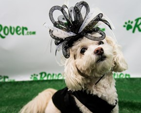 These Fabulous Dogs Are Ready for the Kentucky Derby