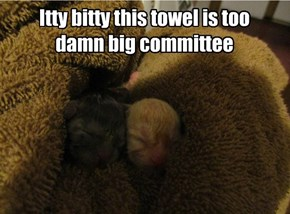 Itty bitty this towel is too damn big committee