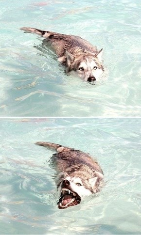 Look at Me, I'm a Crocodog!