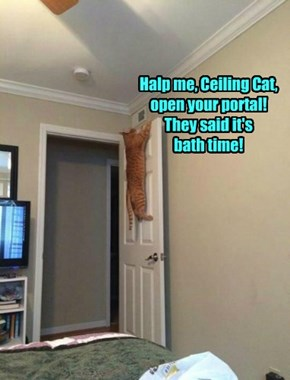Halp me, Ceiling Cat, open your portal! They said it's  bath time!