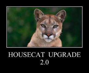 HOUSECAT  UPGRADE 2.0