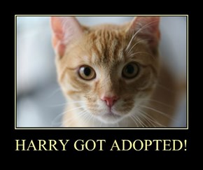 HARRY GOT ADOPTED!