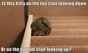 Is this Kitty on the top stair looking down  Or on the bottom stair looking up?