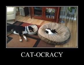 CAT-OCRACY