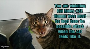 You  are  violating  Cat  Rules  #31.   Human  toes  must  be  kept  bare  for  possible  attack  when  the  cat  feels  like  it.