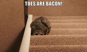 TOES ARE BACON!