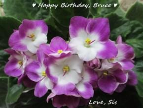 ♥ Happy Birthday, Bruce ♥                            Love, Sis