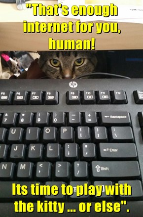 """That's enough internet for you, human!  Its time to play with the kitty ... or else""."