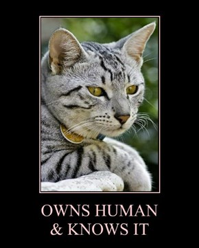 OWNS HUMAN & KNOWS IT