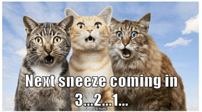 Next sneeze coming in 3...2...1...