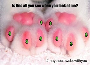 Declaw NEVER!