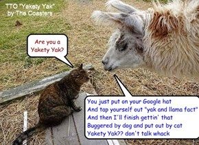 """Yak Confusion"" (TTO ""Yakety Yak"" by The Coasters)"