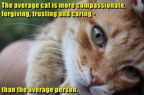 The average cat is more compassionate, forgiving, trusting and caring -  than the average person.