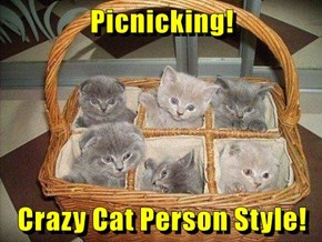 Picnicking!  Crazy Cat Person Style!