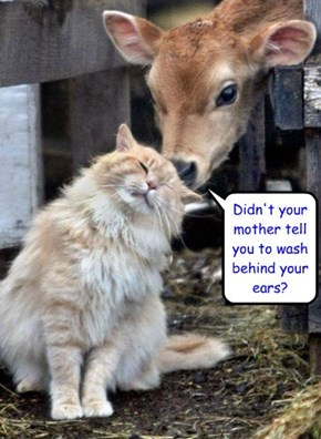 Didn't your mother tell you to wash behind your ears?