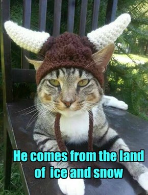 Viking Cat is Your Overlord Now