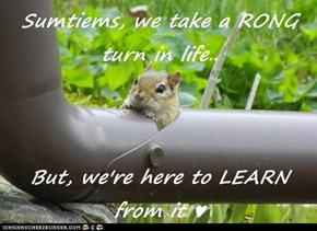 Sumtiems, we take a RONG turn in life..  But, we're here to LEARN from it ♥