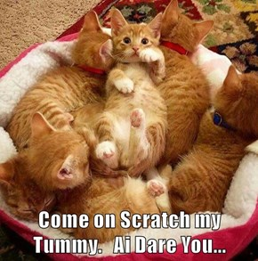 Come on Scratch my Tummy.   Ai Dare You...