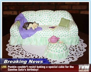 Breaking News - Punkin couldn't resist baking a special cake for the Comfee Sofa's birthday!