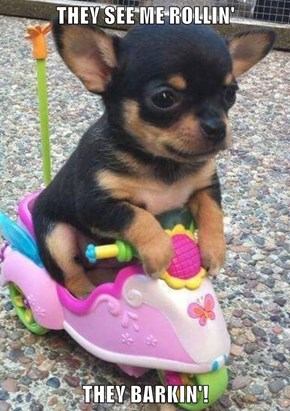THEY SEE ME ROLLIN'  THEY BARKIN'!
