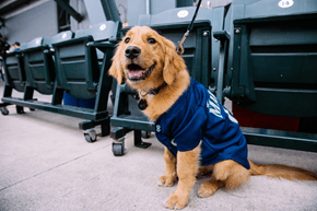 Bark in the Park with the Seattle Mariners is Baseball's Cutest Night of the Year