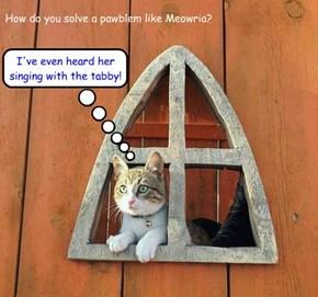 How do you solve a pawblem like Meowria?