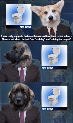 If Dogs Hosted SNL's Weekend Update