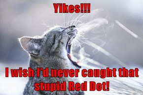 Yikes!!!  I wish I'd never caught that stupid Red Dot!