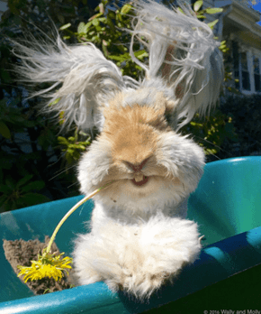 Wally the Long-Haired Bunny is Basically a Stuffed Animal Come to Life