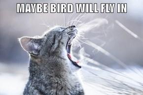 MAYBE BIRD WILL FLY IN
