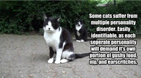 Some cats suffer from multiple personality disorder. Easily identifiable, as each seperate personality will demand it's own portion of gushy food, nip, and earscritches.