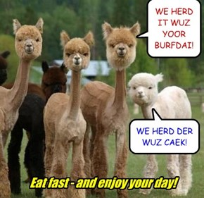 WE HERD IT WUZ YOOR BURFDAI!