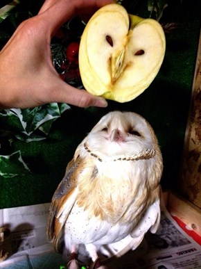 Owl Let You Decide Which One Is the Bird and Which One Is the Apple