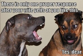 There is only one proper response after your wife yells at you like this...  Yes, dear.