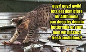 guyz! guyz! qwik! lets eet dem bfore Mr.Allthumbs  can deep fry dem in buttermilk or stuff  dem wif picklez! fresh anchobeez!
