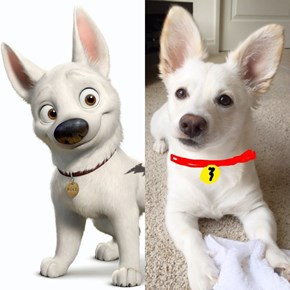 We Found Bolt's Real Life Lookalike