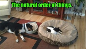 The natural order of things.