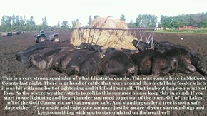 County Sheriffs Office  This is a very strong reminder of what Lightning can do. This was somewhere in McCook County last night. There is 21 head of cattle that were around this metal bale feeder when it was hit with one bolt of lightening and it killed t